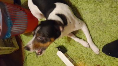 koskihuolto-oy